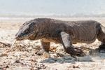 Indonesien - Insel Komodo - Komodo Nationalpark
