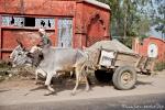 Ochsenkarren gehören zum normalen Straßenbild