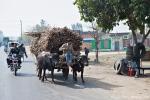 Zuckerrohrtransport