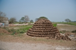 Die Kuhdunghaufen werden getrocknet und dienen als Brennmaterial
