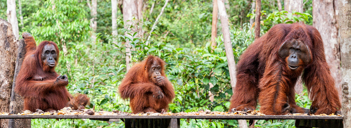 Indonesien Wildlife und Vulkane