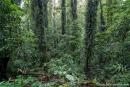 Im Regenwald des Dorrigo National Parks