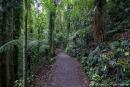 Wanderweg im Regenwald des Dorrigo National Parks