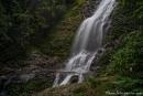 Tristania Falls im Dorrigo National Park