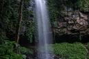 Crystal Shower Fall - Dorrigo National Park