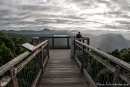 Skywalk im Dorrigo NP