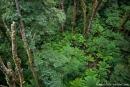 Einblicke in den Regenwald, die sonst nur Vögel haben - Otway National Park