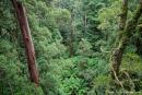 Fantastische Aussicht - Otway National Park