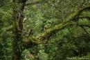 Blick über den Regenwald - Otway National Park