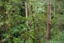 Einblick in den Regenwald des Dorrigo NP