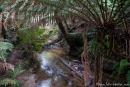 Üppige Regenwaldvegetation