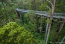 Treetop-Walk im Regenwald - Otway National Park