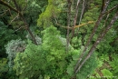 Einblick in den Regenwald des Dorrigo National Park