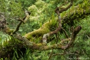 Üppige Regenwaldflora - Otway National Park