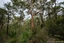 Gemäßigter Küstenregenwald im Royal NP