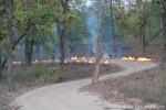 Gelegte Feuer zur Parkpflege - Bandhavgarh National Park