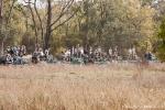 Alle warten auf den Tiger - Bandhavgarh National Park