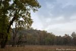 Im Park - Kanha National Park