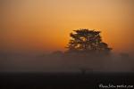 Morgenstimmung im Corbett National Park