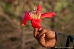 Riesige Blüte