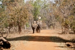 Domestizierte Elefanten für die Tiger-Show - Bandhavgarh National Park