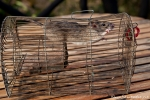 Unser Seifendieb - Treehouse Hideaway, Bandhavgarh National Park