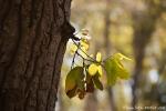 Im Park sprießt überall frisches Grün - Kanha National Park
