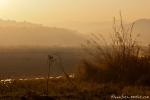 Sonnenaufgang im Park - Corbett National Park
