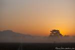 Stimmungsvoll - Corbett National Park