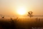 Sonnenaufgang im Corbett National Park