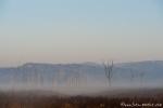Morgennebel über dem offenen Grasland - Corbett National Park