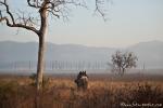 Morgens auf dem Rücken eines Elefanten - Corbett National Park