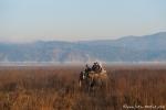 Elefantensafari durch das Grasland des Parks - Corbett National Park
