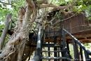 Unser Baumhaus im Treehouse Hideaway - Bandhavgarh National Park
