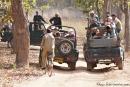 Parkmitarbeiter bewegen sich per Fahrrad und unbewaffnet durch den Park - Bandhavgarh National Park