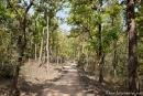 Im Park unterwegs - Kanha National Park