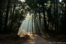 Das Morgenlicht bricht sich im Wald - Corbett National Park