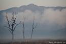 Morgennebel steigt auf - Corbett National Park