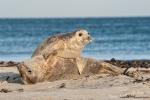 Gewonnen - Seehund mit Nachwuchs