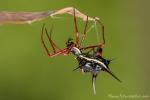 Spinnen/Skorpione