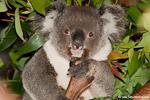 Australien_2010-2011