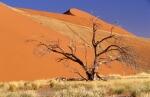 Namibia_Suedafrika_2006