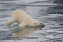 Arktis - Spitzbergen
