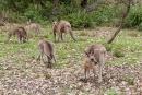 Der Murramarang National Park ist bekannt für seine große Kängurupopulation