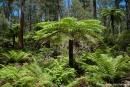 Der Wald wirkt wie verzaubert - Cottan Bimbang NP