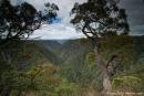 Blick über die Schlucht an den Tiara Falls - Oxley National Park