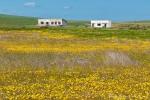 Südafrika - Namaqualand
