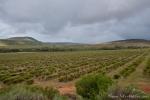 Südafrika - Clanwilliam